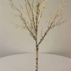 Birch tree on stand