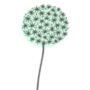 small-allium.png